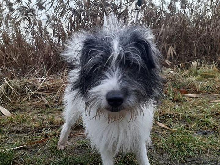 Trucizny dla psów w częstochowskich parkach?