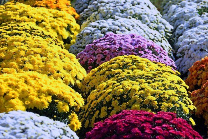 Sprzedawcy kwiatów nie zostaną bez pomocy