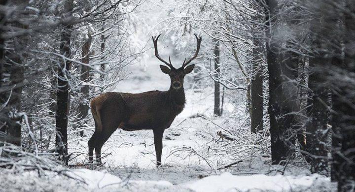 Dzień Dokarmiania Zwierzyny Leśnej