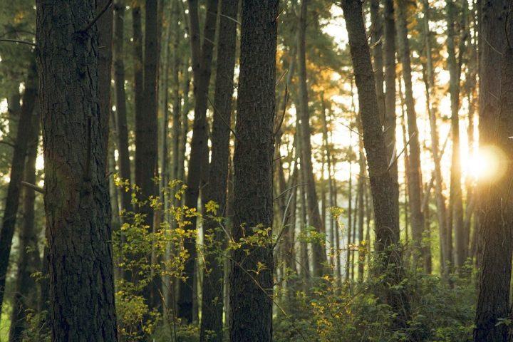 21 marca – Światowy Dzień Lasu