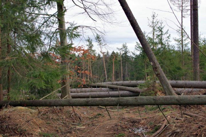 Kolejna wycinka drzew w Częstochowie